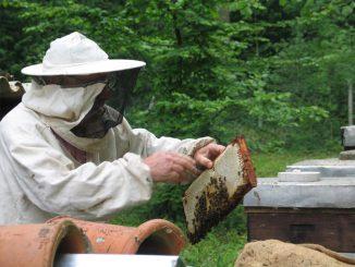 6-millions-abeilles