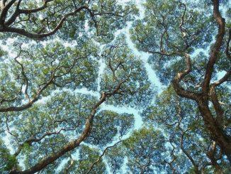arbres-touche