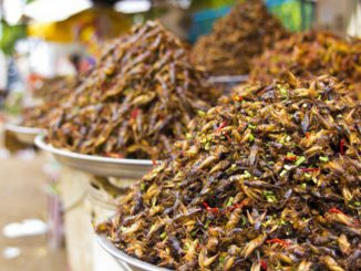 Inside China's Edible Insect Industry