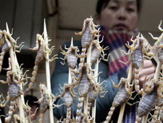 Inside China's bug-eating industry